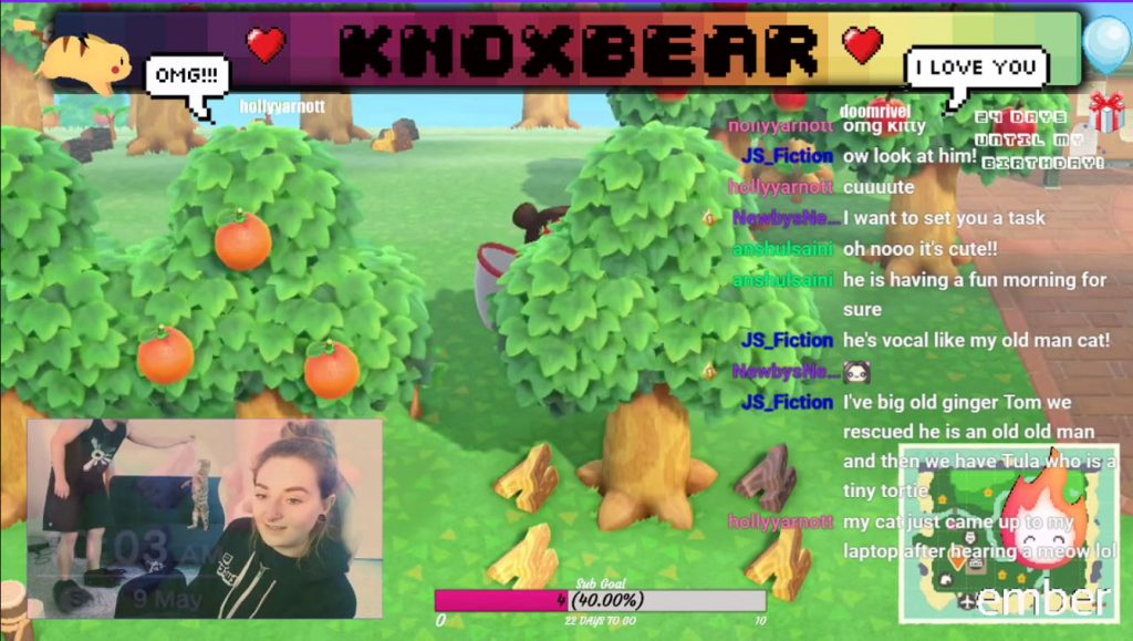 Knoxbear plays Animal Crossing on Twitch